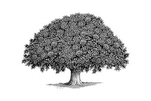Illustration Of A Tree In A Vi...