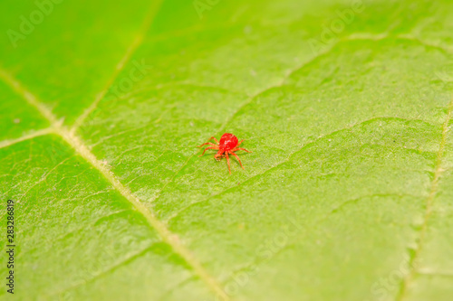 red mite on plant Wallpaper Mural