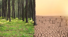 Green Forest And Dry Cracked E...
