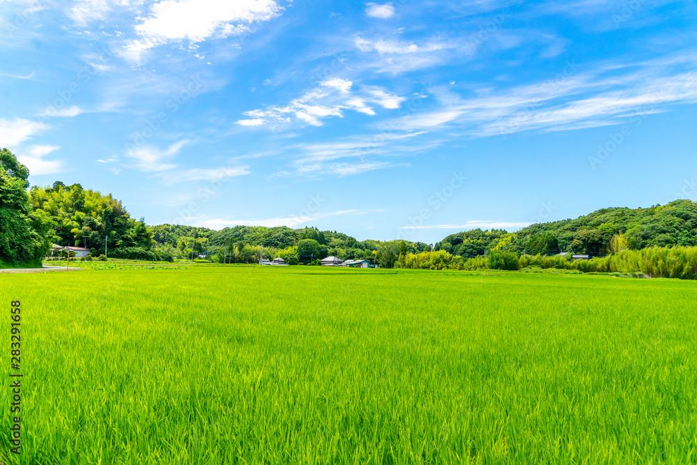 Fototapeta 田園風景
