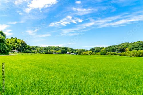 Obraz 田園風景 - fototapety do salonu