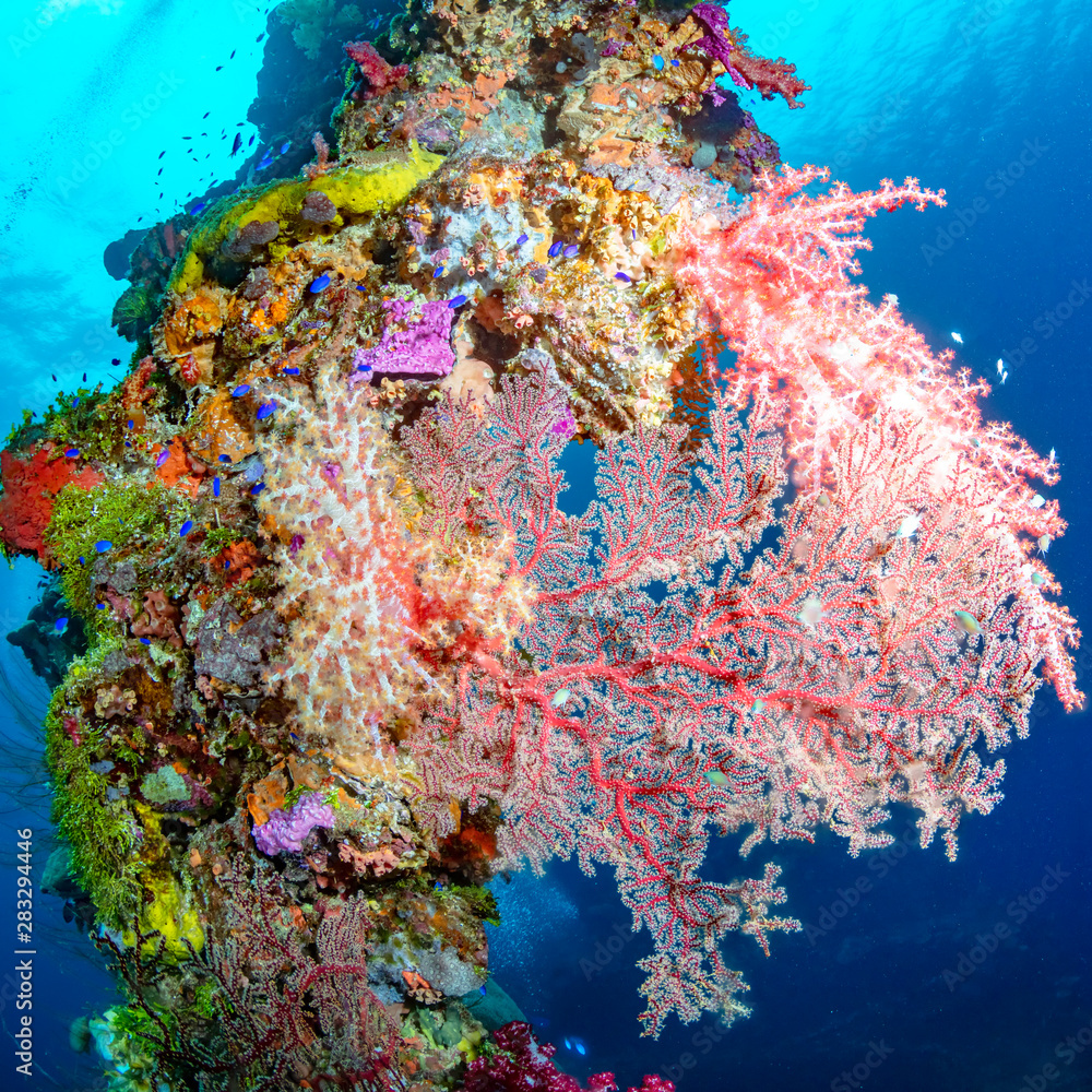 Pink Soft Coral On A Vertical Mast In Shallow Blue Water