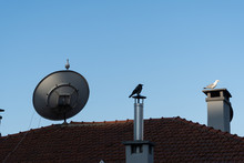 Three Birds On A Roof