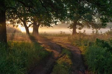 Fototapeta na wymiar Oak leaves in the morning light with sunlight. Sunrise on the field