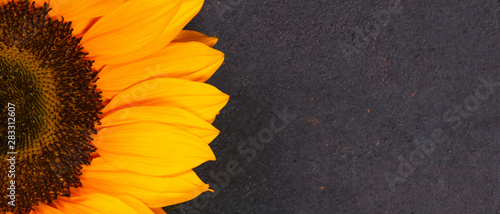 Bright banner with yellow sunflower on the brown background