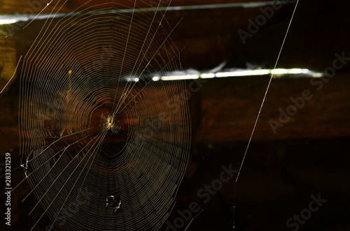 Fotografía  Large circular web with a house spider and parallel cobwebs against the dark vil