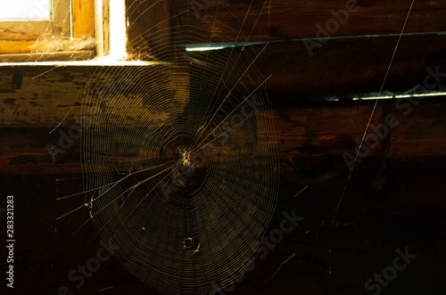 Fotomural  Spider net with a house spider in the center in a dark attic with daylight from