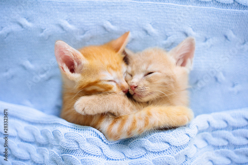 Baby cat. Ginger kitten sleeping under blanket Poster Mural XXL