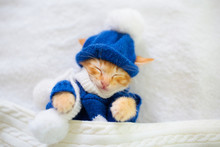Baby Cat In Sweater And Hat. K...