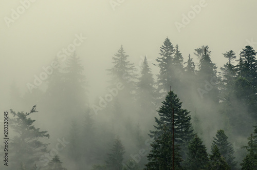 Foto op Canvas Bos Misty mountain landscape