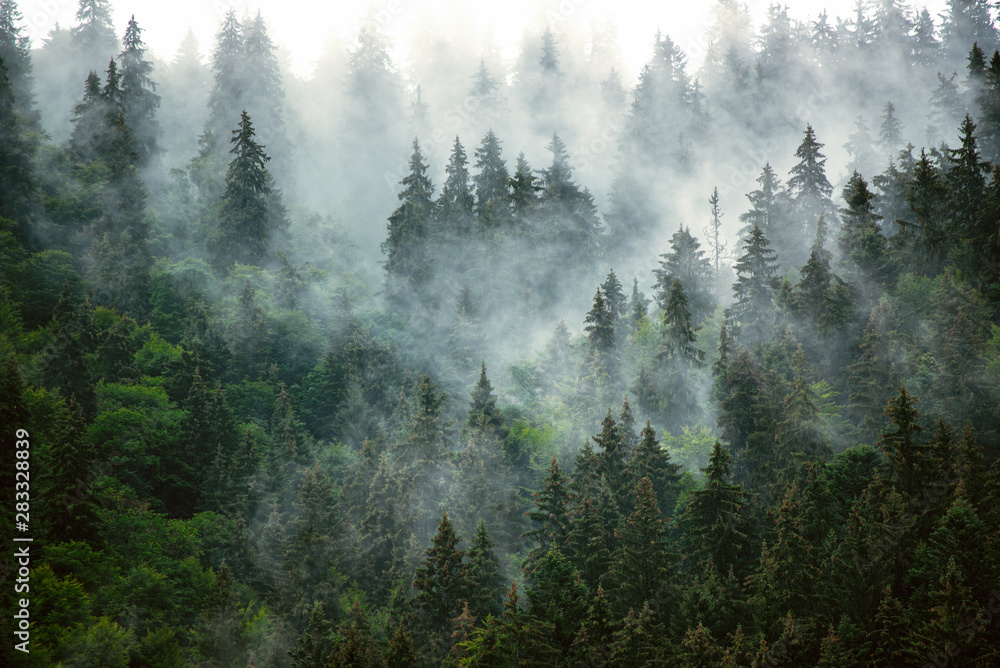 Fototapeta Misty mountain landscape