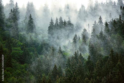 Misty mountain landscape - 283328839