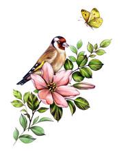 Hand Drawn Goldfinch Sitting On Pink Flower