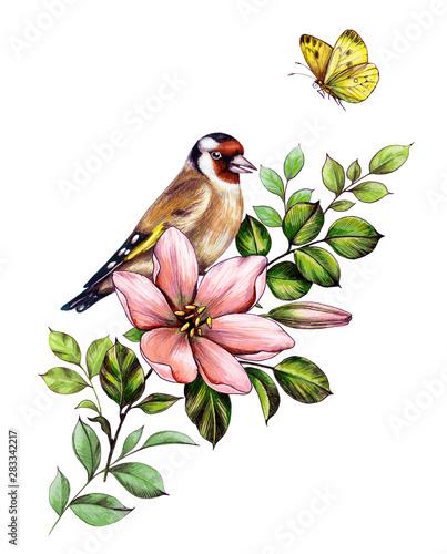Fototapeta Hand Drawn Goldfinch Sitting on Pink Flower