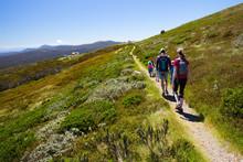 Mount Buller Walking Trails In...