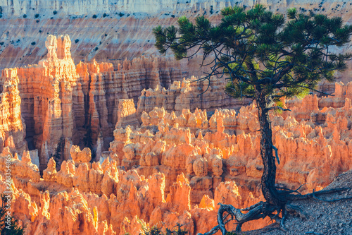 Bryce Canyon National Park, Utah, USA Wallpaper Mural