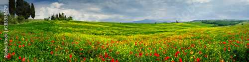 Fotografiet  Poppies is a field in Tuscany, Italy