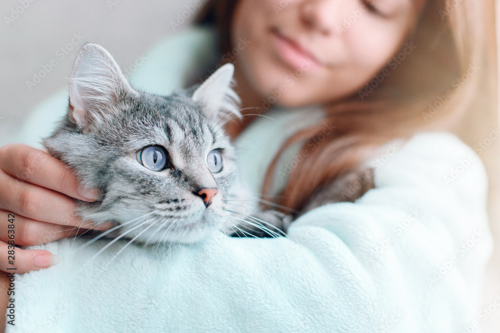 Fototapety, obrazy: Beautiful woman at home holding and hug her lovely fluffy cat. Gray tabby cute kitten with blue eyes. Friend of human. Good sunny morning.