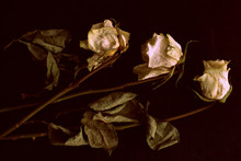 Wilted White Roses On A Dark B...