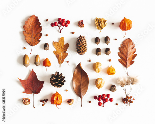 Autumn composition. Pattern made of dried leaves, flowers, berries on white background. Autumn, fall, thanksgiving day concept. Flat lay, top view - 283391024