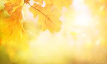 Blurred Abstract Autumn Background. Autumn Foliage Effect. Glitter Golden Bokeh Lights.