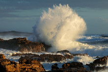 Seascape With Large Breaking Wave On Coastal Rocks, South Africa .