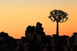 canvas print picture Silhouette of a quiver tree (Aloe dichotoma) and rocks at sunset, Namibia.