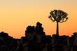 Leinwandbild Motiv Silhouette of a quiver tree (Aloe dichotoma) and rocks at sunset, Namibia.