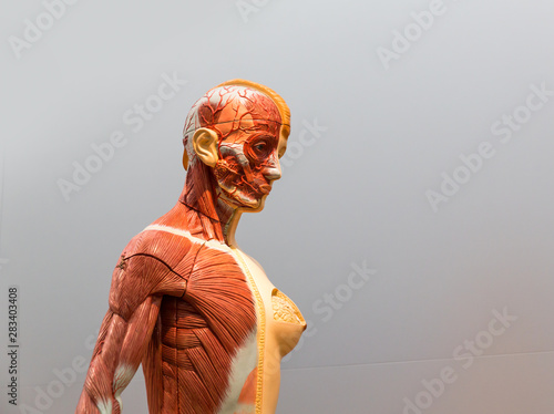 Poster Ouest sauvage Anatomical model of female human body
