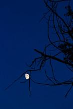 Rising Moon Caught Between Dry...