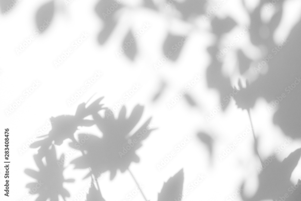 Fototapety, obrazy: Gray shadows of the flowers on a white wall. Abstract neutral nature concept background. Space for text. Blurred, defocused