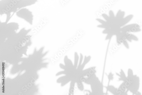 Gray shadows of the flowers on a white wall. Abstract neutral nature concept background. Space for text. Blurred, defocused - 283408492
