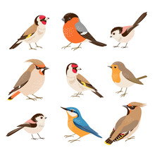 Set Of European Autumn And Winter Birds Isolated On White Background.