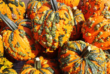 Warty Goblin Pumpkins