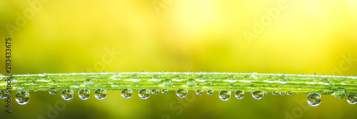 Photo fresh morning dew drops on green grass, spring macro nature background, close up