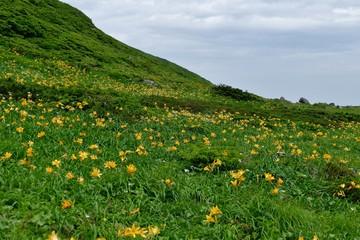 《秋田駒ヶ岳の登山》秋田県仙北市