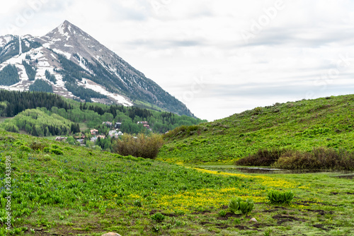 Mount Crested Butte, Colorado mountain view on Snodgrass trail in summer with field meadow of buttercup yellow flowers