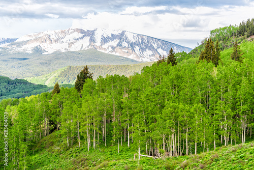 Green Aspen trees forest in sunny Crested Butte, Colorado Snodgrass hiking trail in summer with snow mountain in background