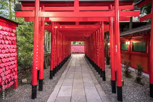 Photo 【愛知県犬山市】三光稲荷神社の千本鳥居