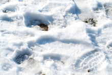 Melting Snow With Human Shoes Footprints