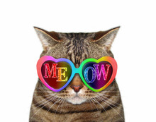 The Funny Cat Wears Colored Sunglasses With Inscription Meow. White Background. Isolated.