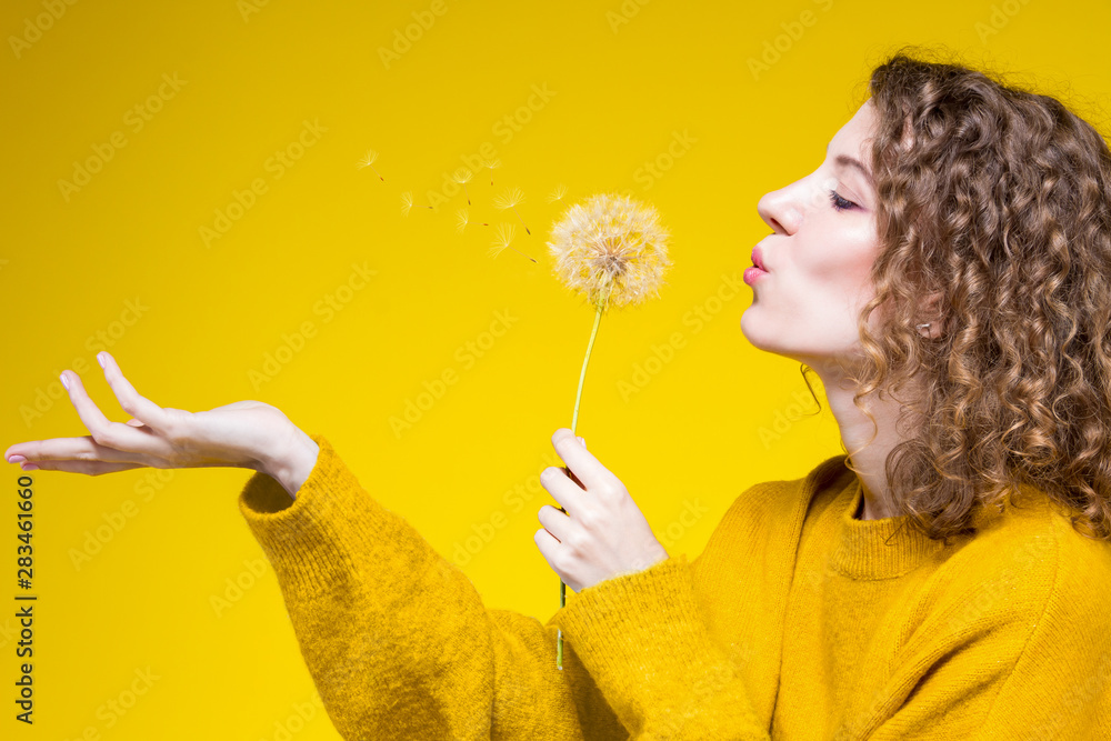 Fototapety, obrazy: Colorful fashion modern beauty sexy skinny women female adult model wearing yellow long hoody sweater and sunglasses blows dandelion isolated on solid yellow background. Beauty and fashion concept.
