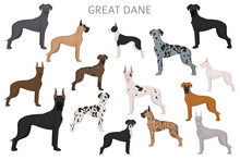 Great Dane. Different Variatie...