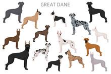 Great Dane. Different Variaties Of Coat Color Dog Set