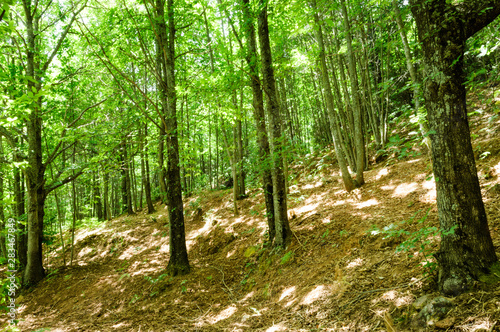 Photo Stands Road in forest Ojén, Málaga, Andalusia, Spain, Europe