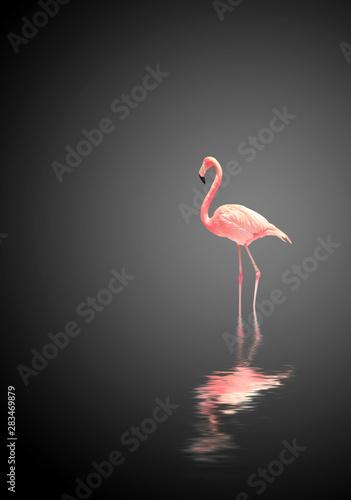 In de dag Flamingo Flamingo on black background