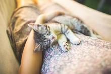Cute Grey Cat Lying On Its Own...