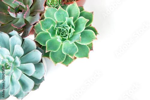 Obraz na plátně Mix types of Echeveria Succulent Plant Pots Top View Arrangement Background