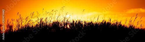 Montage in der Fensternische Melone Plants in the field at sunset
