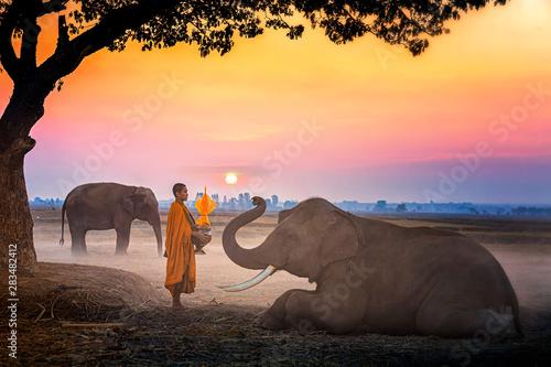 Fotografía  Elephant made merit a monk's bowl